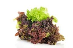 Assortment salad Stock Photography