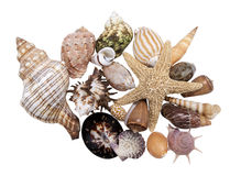 Assortment of sea shells, isolated Stock Images