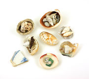 Assortment small shells Royalty Free Stock Photography