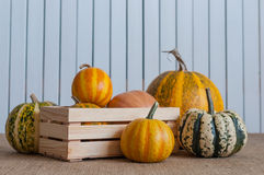 Assortment squashes and pumpkins in wooden crate Royalty Free Stock Photo