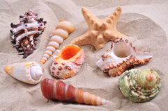 Assortment of starfish and seashells Royalty Free Stock Photos