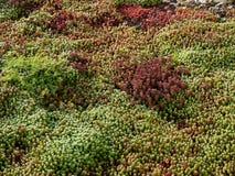 An assortment of succulent plants Stock Images