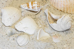 Assortment of tropical shells on warm sandy beach Stock Photo