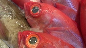 Assortment various fresh fish in market stock video footage