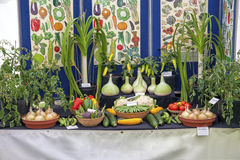 Vegetables on display  for the National Vegetable Society competition. Stock Photo