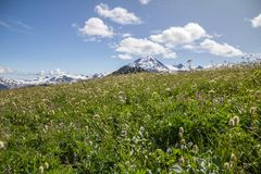 Alpine meadows, Mt. Baker and fluffy white clouds, North Cascades. An assortment of white, blue and yellow wildflowers and green grasses provide the foreground Stock Images