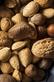 Assortment of Whole Raw Mixed Nuts Stock Image