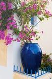 assos bougainvillaea zdjęcie stock