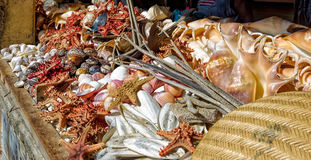 Asssorted sea shells at seafood market Stock Photography