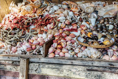 Asssorted sea shells at seafood market Stock Images