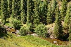 Assyplateau in de berg van Tien Shan in Alma Ata, Kazachstan, Azië bij de zomer Stock Afbeeldingen