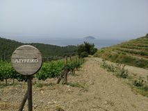 Assyrtiko winery vineyards  in Greece Stock Photo