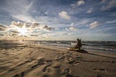 Ast auf dem Strand Stockfotos