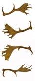 astas de los Barbecho-ciervos Fotos de archivo