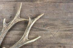 Astas de los ciervos en un fondo de madera Imagen de archivo libre de regalías