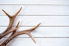 Astas del macho en fondo blanco rústico de la madera imágenes de archivo libres de regalías