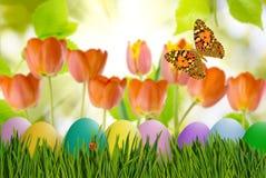 Asterów jajka w trawie, motylu na nieba tle i kwiatach, Obraz Royalty Free
