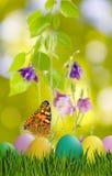 Asterów jajka w trawie, motylu na nieba tle i kwiatach, Obraz Stock