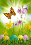 Asterów jajka w trawie, motylu na nieba tle i kwiatach, Obrazy Stock