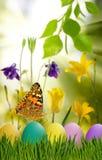 Asterów jajka w trawie, motylu na nieba tle i kwiatach, Zdjęcie Royalty Free