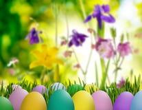 Asterów jajka w trawie, motylu na nieba tle i kwiatach, Zdjęcia Royalty Free