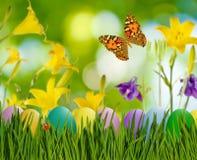 Asterów jajka w trawie, motylu na nieba tle i kwiatach, Fotografia Stock