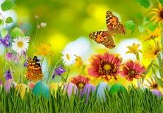 Asterów jajka w trawie, motylu na nieba tle i kwiatach, Zdjęcie Stock