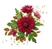 Asterów kwiatów przygotowania z złotymi textured liśćmi Zdjęcia Royalty Free