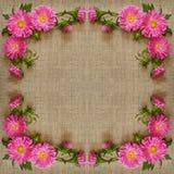 Asterów kwiatów rama na kanwie Obraz Stock