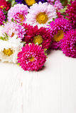 Asterów kwiaty Zdjęcie Royalty Free