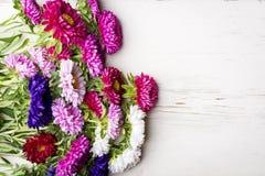 Asterów kwiaty Obraz Stock