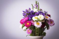 Asterów kwiaty Fotografia Stock