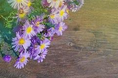 Aster alpino porpora su fondo di legno Fotografie Stock Libere da Diritti