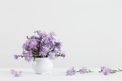 Aster amellus bouquet in ceramic vase. On white background stock image