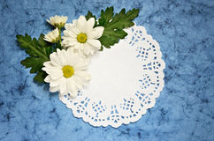 Aster arrangement on blue paper Royalty Free Stock Photos