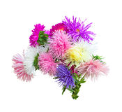 Aster Autumn Flowers Royalty Free Stock Image