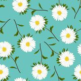 Aster blanc, marguerite sur Teal Background vert Illustration de vecteur Photographie stock