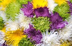 Aster blommar bukettcloseupen Royaltyfri Fotografi