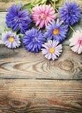 Aster blommar buketten i retro stil Royaltyfria Bilder