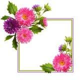 Aster blommar sammansättning och ramen royaltyfria foton