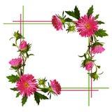 Aster blommar sammansättning och ramen Arkivfoto