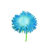 Aster. Blue flower, Spring flower. Isolated on Stock Photography