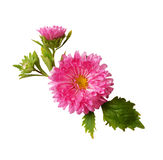Aster composition Stock Photography