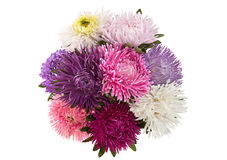Aster flower bouquet closeup Royalty Free Stock Photo