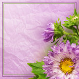 Aster flower composition Royalty Free Stock Image