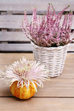 Aster flower in pumpkin Stock Images