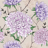 Aster flower. Thais is illustration of flower pattern Stock Image