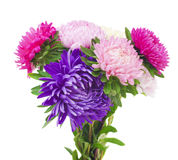 Aster flower on a white background Royalty Free Stock Photos