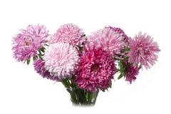 Aster flower Stock Image