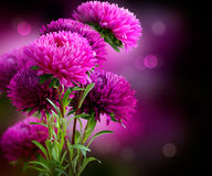 Aster Flowers Art Design. Aster Autumn Flowers Art Design